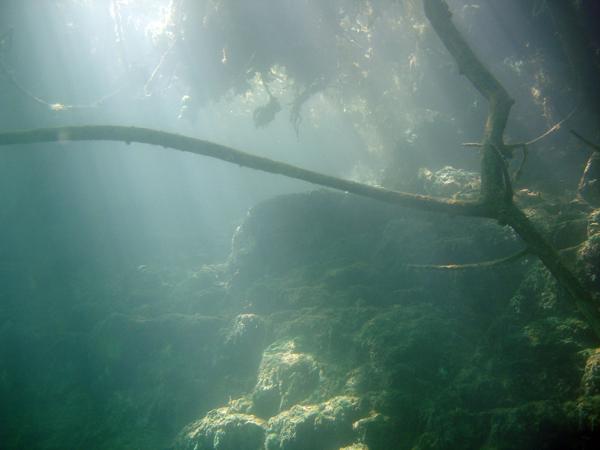 Paysage sous-main en plongée à Beffes